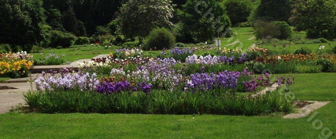 Flore Jardin botanique nancy