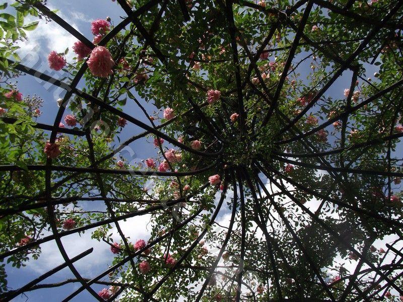 Genealogie et autres page 19 Jardin botanique nancy