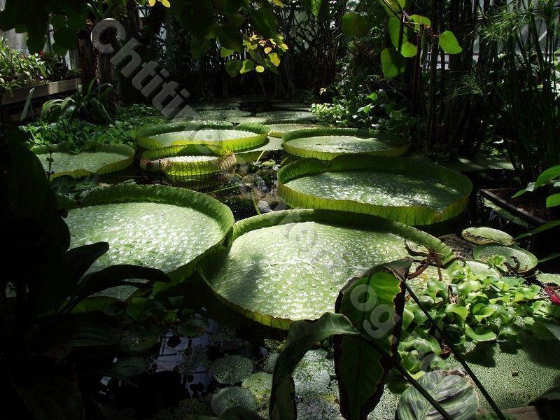 Flore page 4 for Jardin botanique nancy